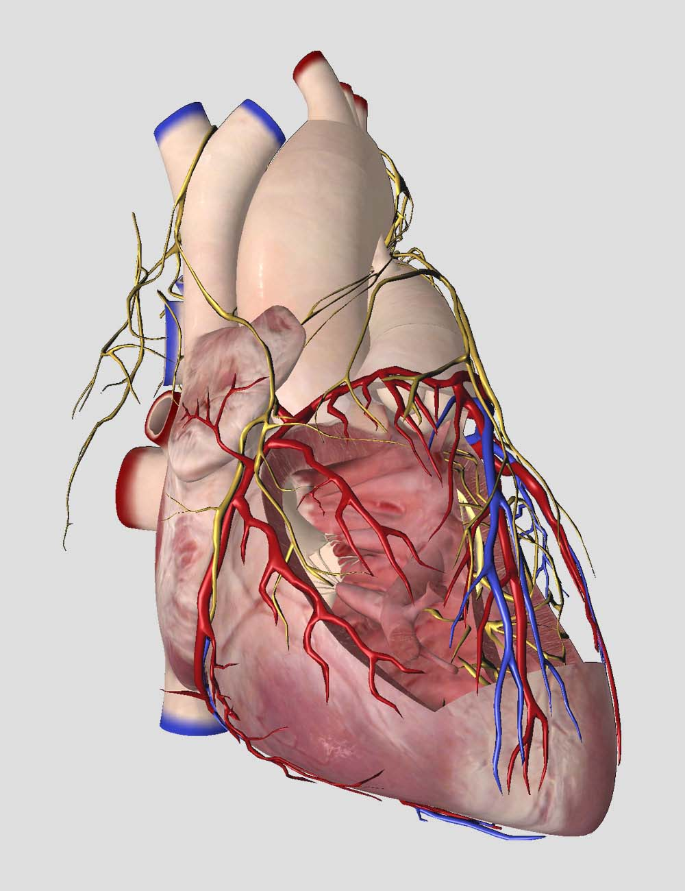 essential anatomy 5 feature