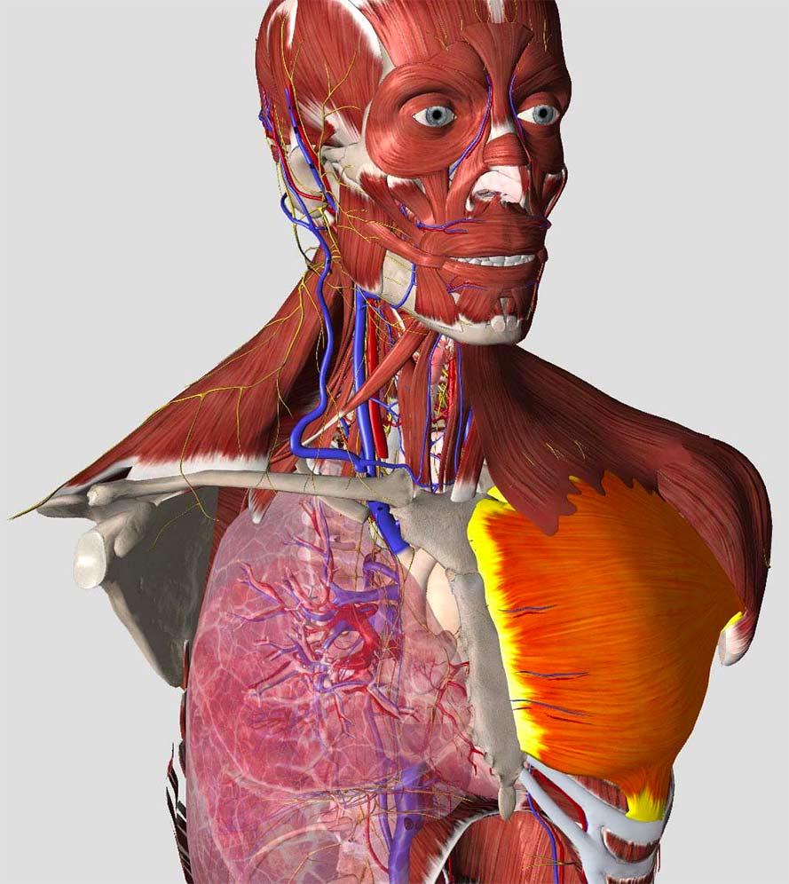essential anatomy 5 systems