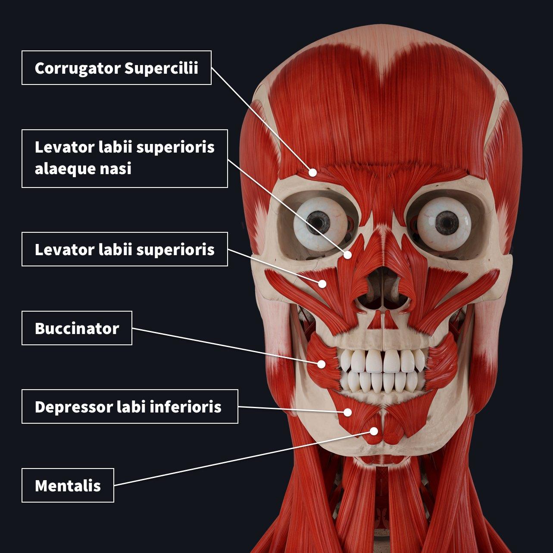 nasal group