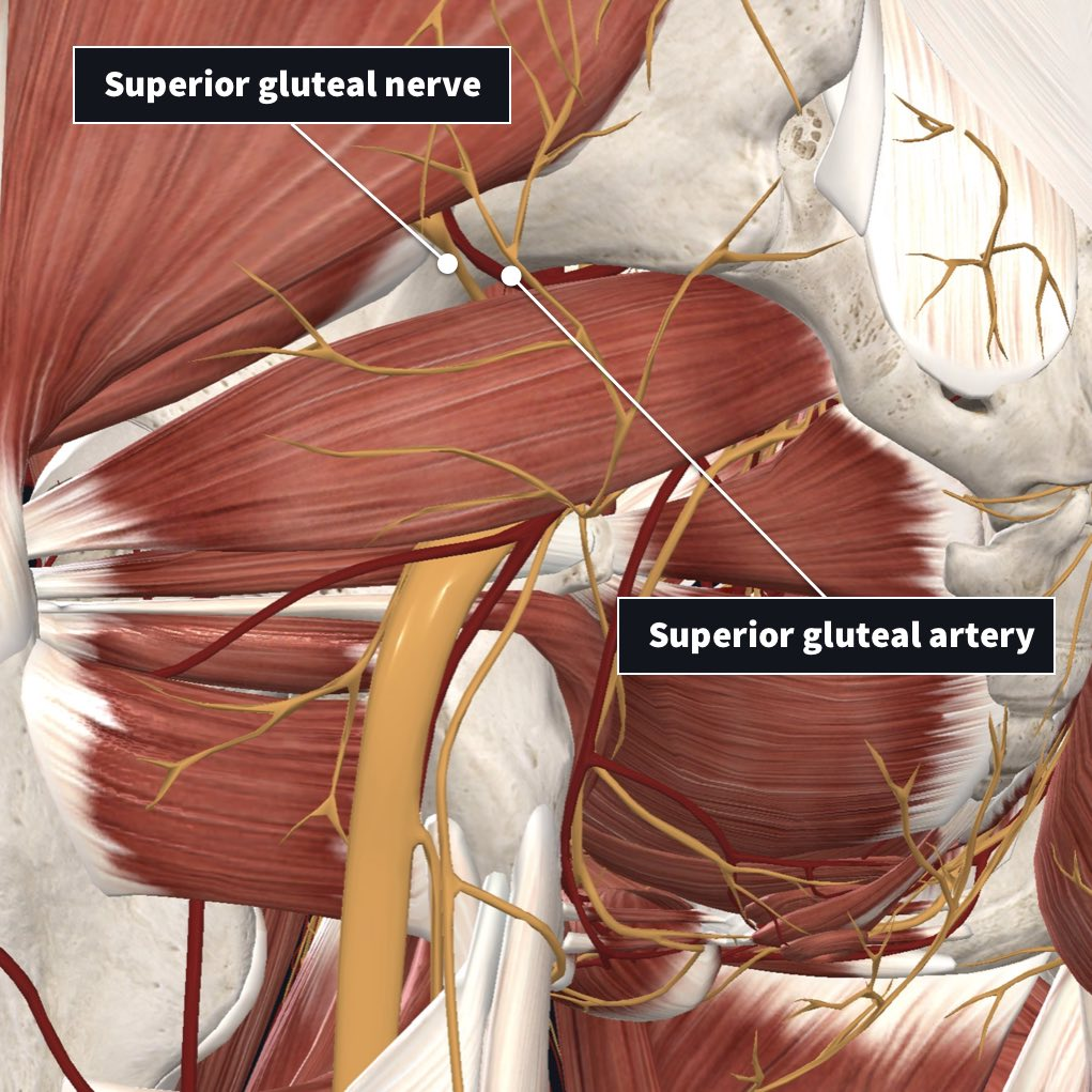 Superior nerve and artery