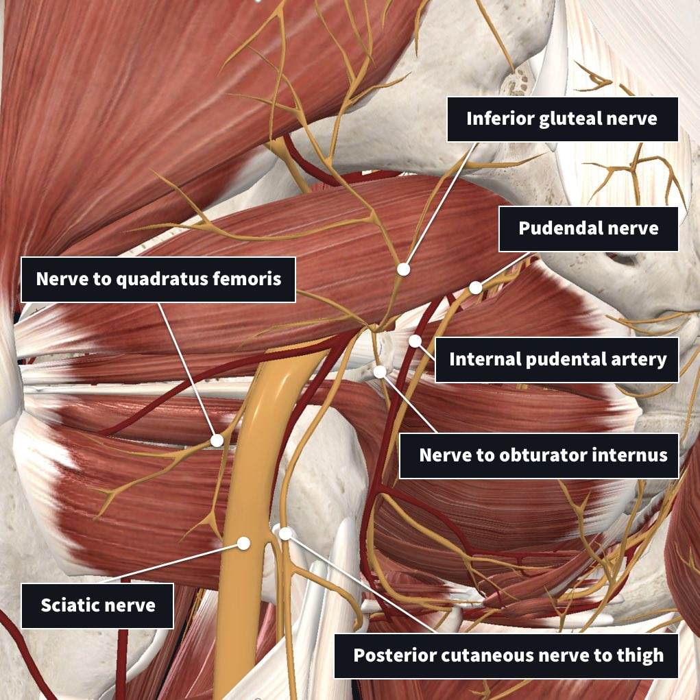 inferior structures